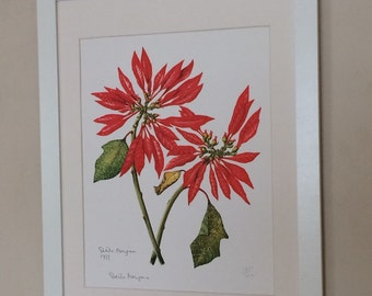 "Mounted and Framed Floral Limited Edition Signed Print by Sheila Morgan 12"" x 16""  - Poinsettia"