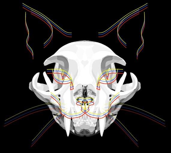 Items similar to Cat Skull Art Print. Cat Skeleton Poster ...
