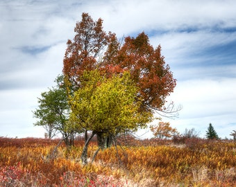 Convergence- Fine Art Landscape Photograph. Dolly Sods Photographic Print. Fall Colors.