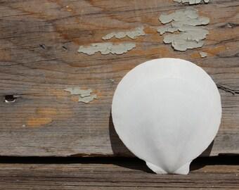 "Beach Decor - 10pc Asian Moon Shells 2- 3 3/4""  - Wedding Shells - Craft Shells - Jewelry"