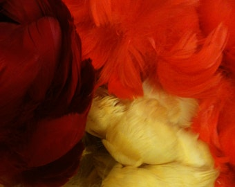 SALE  1 ounce dyed goose coquille feather superior quality make a lei hawaiian lei hulu feathers feathered art