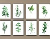 Kitchen Herbs Art Prints Set of 8 Green Botanical Herbalist Kitchen Decor Wall Paintings