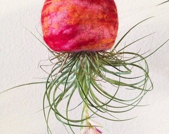 Felted Hanging Air Plant Planter and Wool Terrarium Bowl (Nature Art)