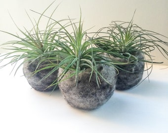 Felted Bowl Air Plant Terrarium (Set of 3)
