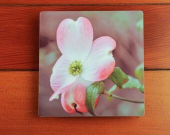 Dogwood Flower Photography Print on Metal