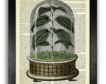Vintage Plant in Cloche Illustration Artwork, Botanical Illustration Art Print, Botanical Drawing, Gifts for Gardener, House Plant Wall Art