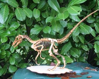 T-Rex T rex Trex, Velociraptor Dinosaur