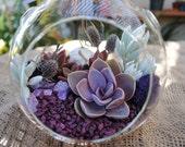 "Succulent Terrarium Kit ""Pretty in Purple""-DIY kit-Large Globe Terrarium-Gardener Gift-Graduation Gift-Purple Home Decor-Birthday Gift"