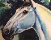 PRICE REDUCED (again!) - Magnificent Equine Portrait