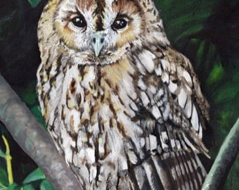 Tawny Owl - Limited Edition Mounted A3 print of beautiful Tawny owl