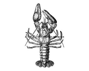 Crayfish Digital Vintage Graphic