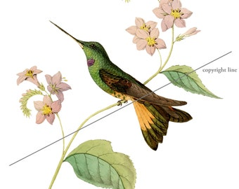 Hummingbird and flowers - Temporary tattoo