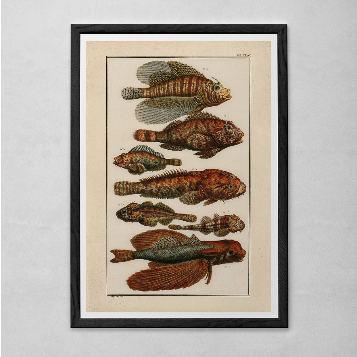 VINTAGE NAUTICAL PRINT Antique Fish Diagram Professional