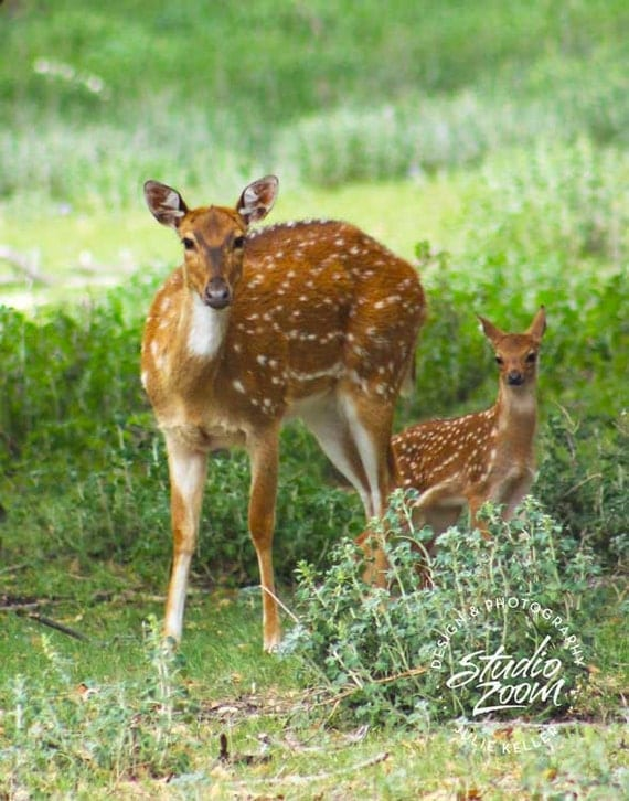 Mother and Baby Deer Photography Print Cute Wildlife by ...