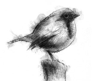 British robin | Limited edition fine art print from original drawing. Free shipping.