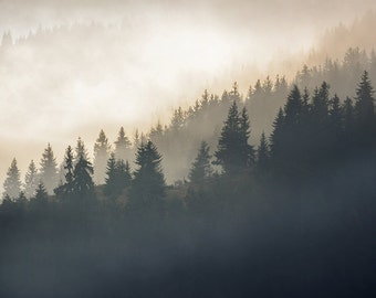 Digital photography download - Landscape Photography - Mountain trees in the mist - Square format