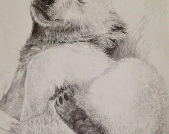 Polar Bear Cub pencil drawing polarbear original drawing graphite drawing art