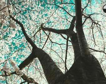 Cherry Blossom Print, Central Park, Turquoise, Pink