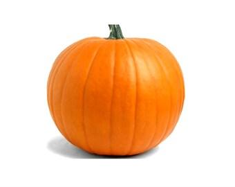 Big Max Pumpkin seeds, heirloom seeds, organic orange pumpkin seeds, organic seeds, home grown pumpkin seeds, 5 seeds, large pumpkins