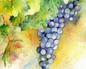 Cabernet Wine Grapes Painting Original Purple Grape Watercolor Art