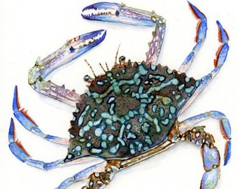 Blue Crab Watercolor Print in sizes 5x7, 8x10, and 11x14