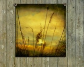 Nature Art Image, Reeds At Sunset, Aged Nature Print, Botanical Photograph, Vintage Style, Dusk, Field Photograph - Glowing Meadow