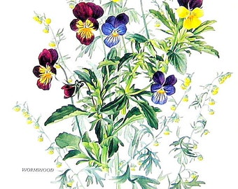 Flower Print - Purple and Yellow Pansy - 1969 Vintage Colored Botanical Illustration - 6 x 9 Book Page