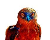 Eagle Art Print Instant Digital Download Bird Boho Hawk Retro Mixed Media Modern Home Wall Decor Brown Tan Yellow Orange Aqua Blue Black