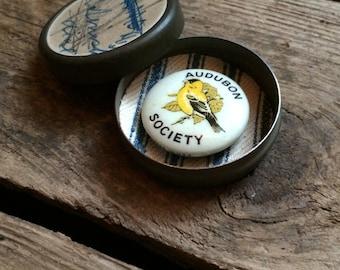 vintage c. 1920s-30s Audubon Society celluloid pinback - American Goldfinch
