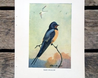 vintage 1930s Barn Swallow book illustration for framing