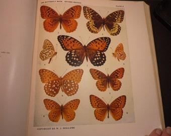 Vintage - Butterflies - 9 Gorgeous Argynnis specimens - 1945 color plate - vibrant color prints - Natural world framable