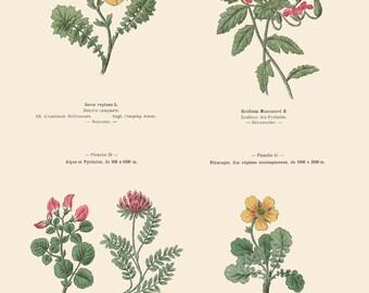 Stork's Bill, Creeping Avens, Alpine Rest Harrow, Mountain Vetch, Botanical Poster, 37, 46, 38, 45, Country Cottage Decor
