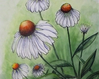 WHITE CONEFLOWERS Original Hand Colored Watercolor Botanical Print 11 x 14