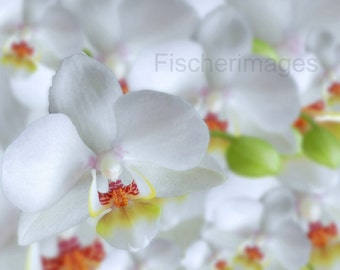 White Orchid Flower Photography Wall Art Home Decor Digital Download Fine Art Photography