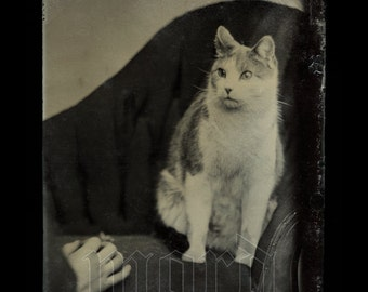 Best of the Best 1860s CAT on Couch Tintype + Hand with Toy