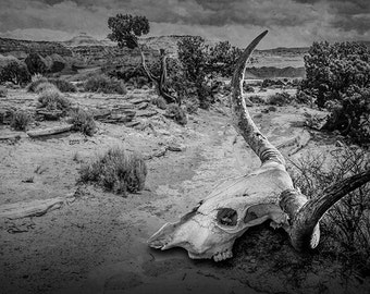 Longhorn Steer Skull of a Dead Cow and Juniper Tree in the Utah Desert in either Black & White or Sepia No.0252 Western Fine Art Photography