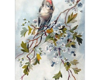 Bird Bees Card   Ruby Crowned Kinglet   Greeting Card and Sticker Seal   Repro Giacomelli
