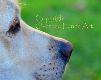 Dog Photography YELLOW LABRADOR  PUPPY Photograph Greeting Card  Dog Portrait Pet Portrait