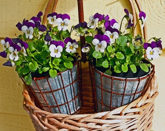 Mother's Day Card Fine Art Photography Pansies in Basket Greeting Card Purple and white flowers in tin flower pots