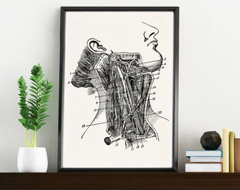 Arteries anatomy  Print- Wall art collage neck anatomy  print poster- Science prints wall art WSK014