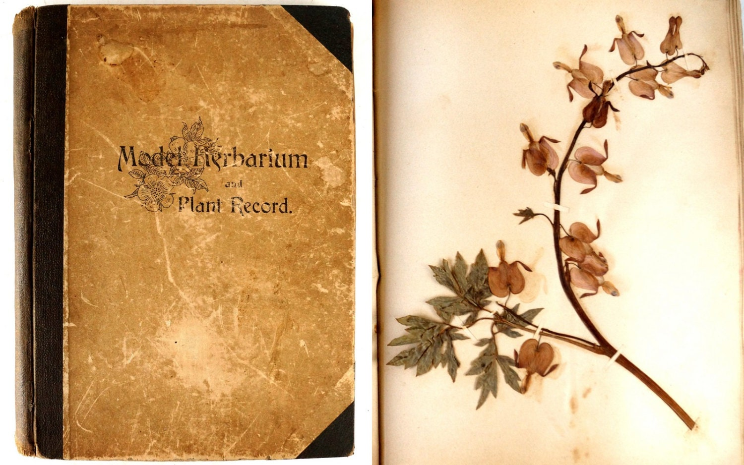 Vintage antique model herbarium and plant record - Model herbarium ...