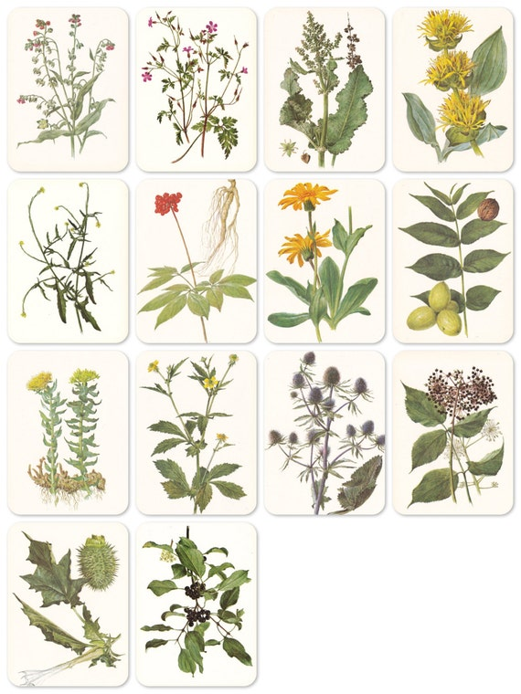 Plants, Herbs, Bestiary. Drawings by Shipilenko. Set of 14 Vintage 8''x6'' Prints -- 1987. Fine Arts Publ., Moscow