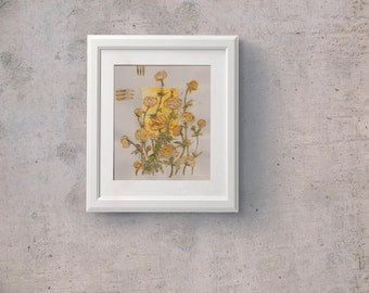 Yellow Globeflowers - Globe flowers -Trollius - wild alpine flowers - Original painting on paper and silk - Floral Botanical artwork - OOAK