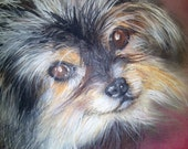 pet portrait custom made of your foto, dog portrait,  Pastel on paper, handmade by artist