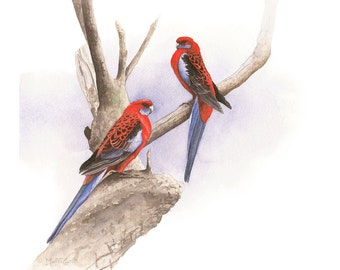 Crimson Rosellas Original Watercolour Painting
