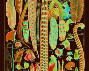 Dark Feathers Art Print, SIX SIZE OPTIONS