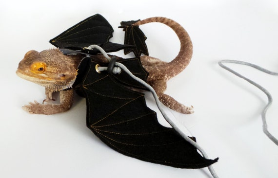 how to make dragon wings with card board