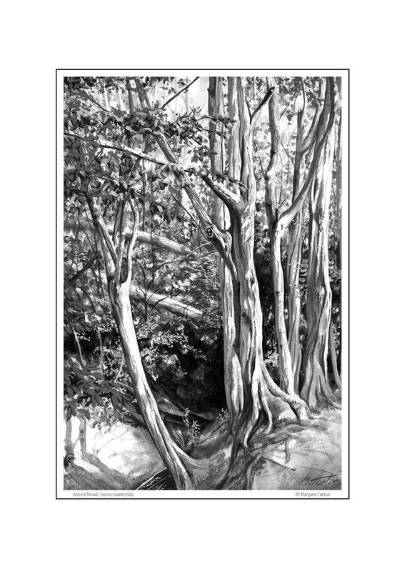 Ancient Woods
