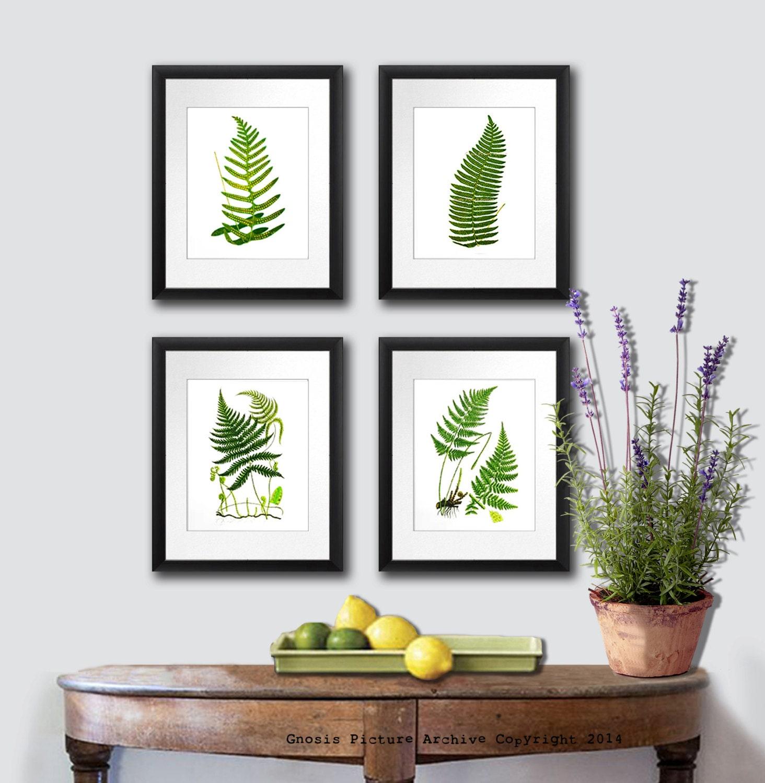 Back to School decor Ferns Art Print Woodland Wall Art Fern