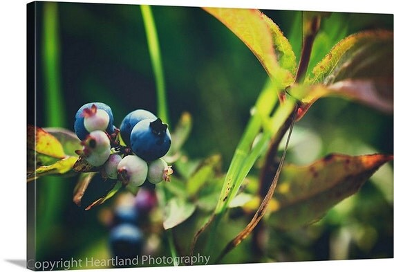 Large Wall Art, Photo Canvas, Nature Photography, Blue and Green, Wild Blueberries, Natural Food Picture, Kitchen Decor, Berry Photograph